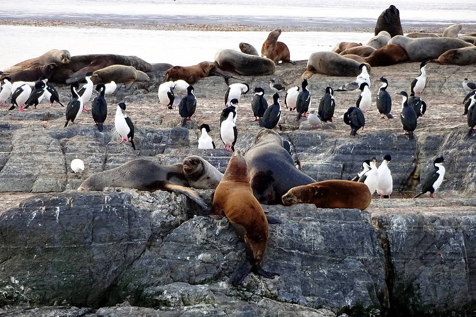 Sea lions and cormorants at Beagle Channel