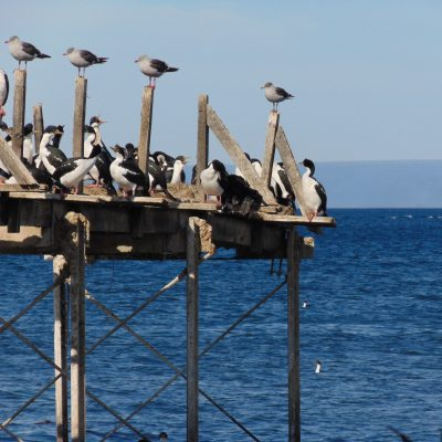 Some more of my cormorants and sea gulls. Photo: Alica Ohnesorge